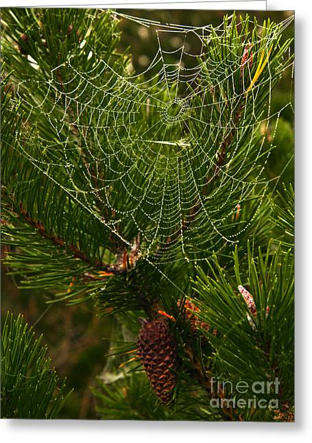 Morning Dew On Cobweb Greeting Card