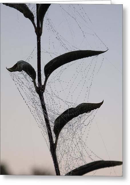 Morning Dew On Spiderweb Greeting Card