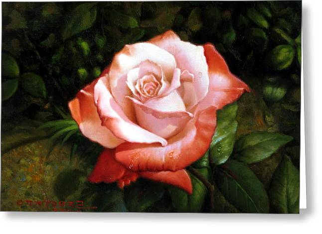 Morning Dew On The Rose Faded Greeting Card