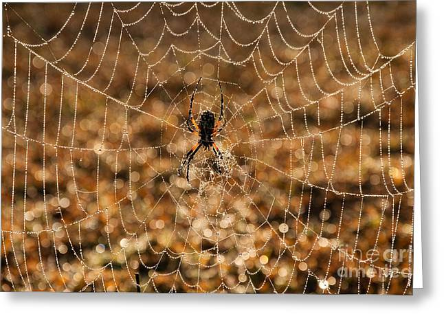 Morning Dew On The Web Greeting Card by Sari ONeal