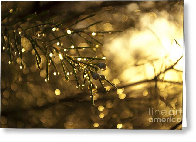 Greeting Card featuring the digital art Morning Dew by Serene Maisey