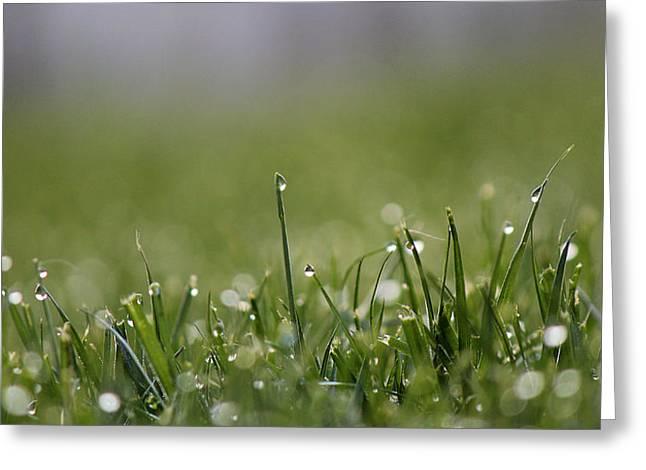 Morning Dew Greeting Card by Silke Brubaker
