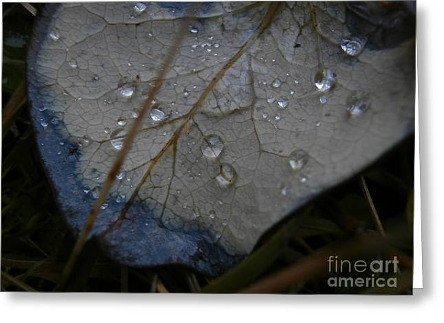 Morning Dew Greeting Card by Steven Valkenberg