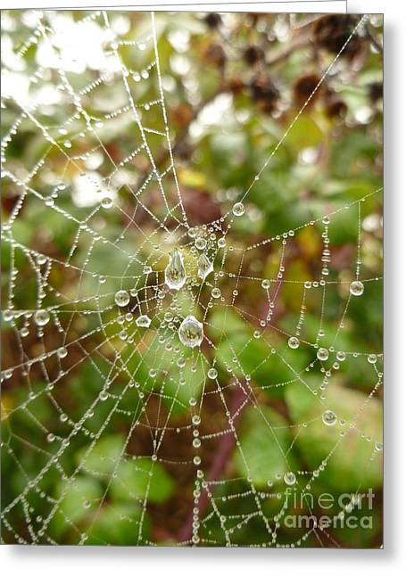 Greeting Card featuring the photograph Morning Dew by Vicki Spindler