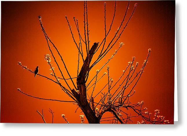 Morning Dove Sunrise Greeting Card