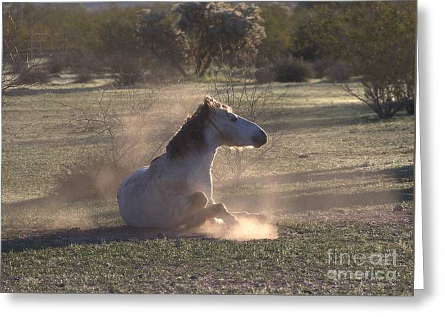 Greeting Card featuring the photograph Morning Dust Bath by Ruth Jolly