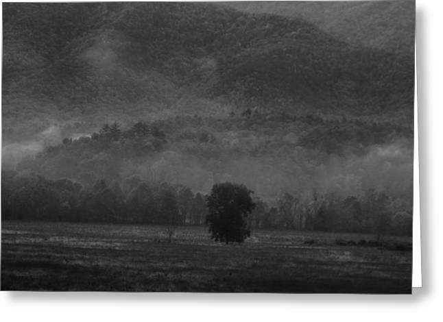 Morning Fog In Tennessee Greeting Card by Dan Sproul