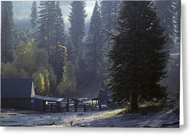 Greeting Card featuring the photograph Morning Frost At Dawn by David Bailey