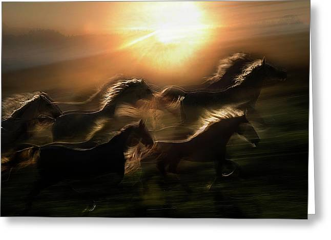 Morning  Gallop Greeting Card