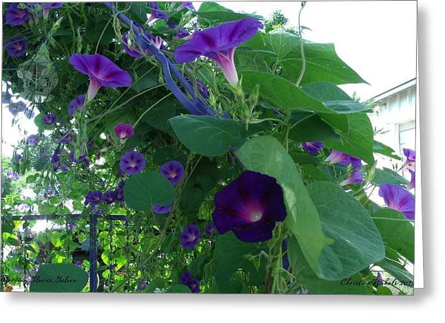 Morning Glories Galore Greeting Card