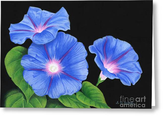 Morning Glories On Black Greeting Card by Sarah Batalka