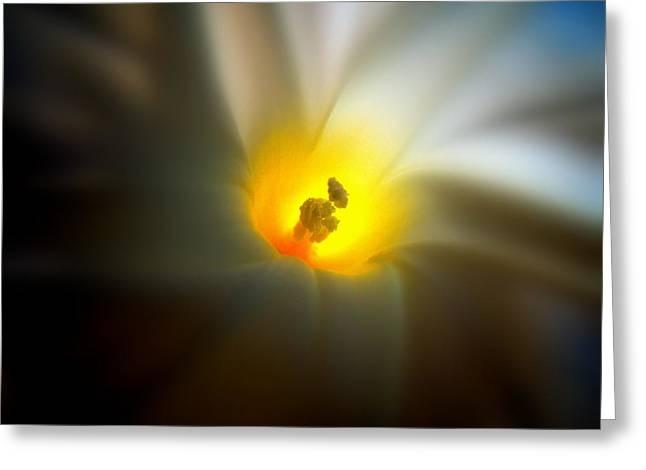 Morning Glory Greeting Card by Nick Kloepping