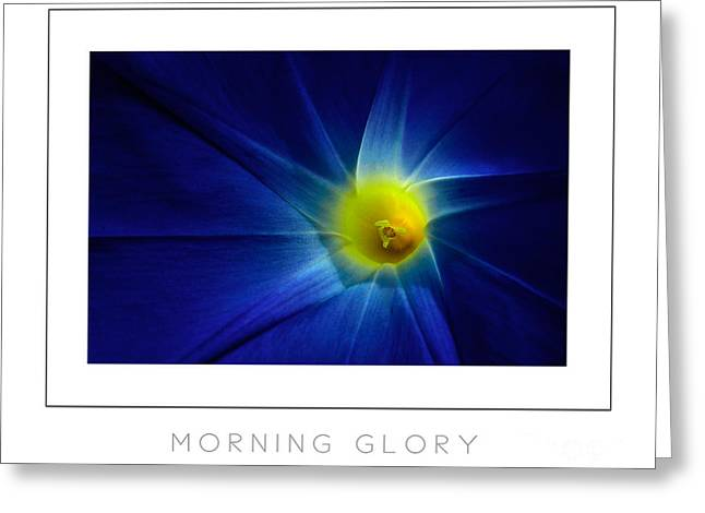 Morning Glory Macro Poster Greeting Card by Mike Nellums