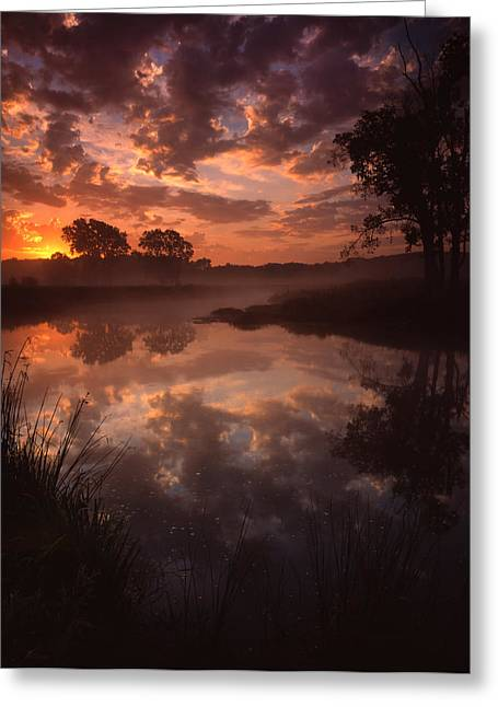 Morning Glory Greeting Card by Ray Mathis