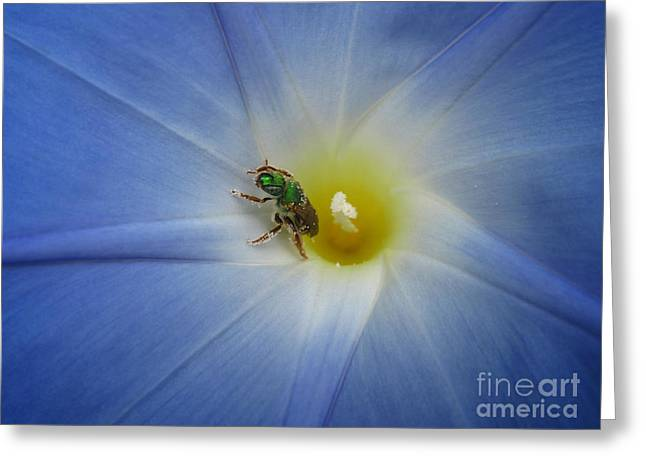 Morning Glory Visitor 1 Greeting Card