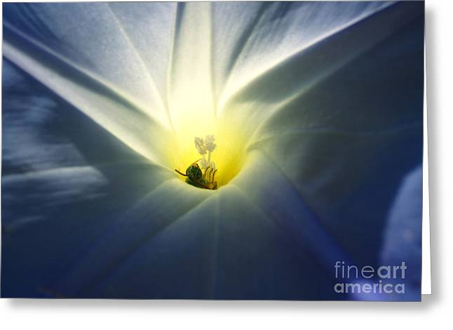 Morning Glory Visitor 2 Greeting Card