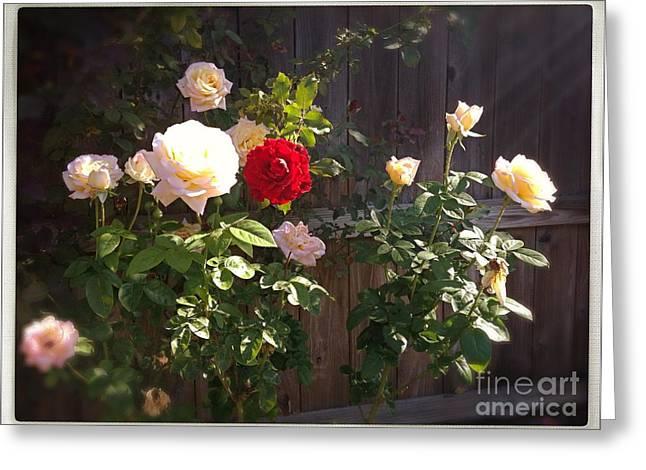 Morning Glory Greeting Card by Vonda Lawson-Rosa