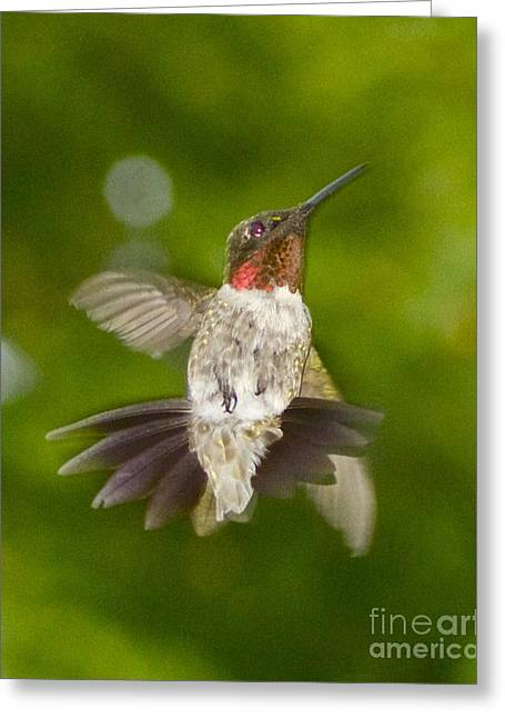 Greeting Card featuring the photograph Morning Greeter by Alice Mainville
