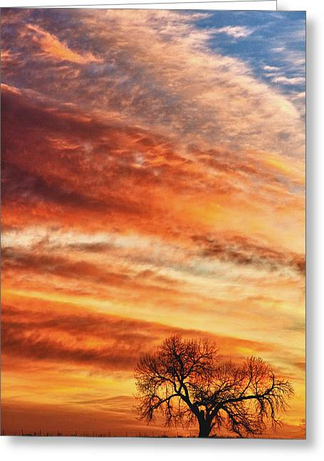 Morning Has Broken Greeting Card by James BO  Insogna