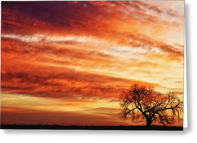 Morning Has Broken Like The First Dawning Country Landscape Greeting Card by James BO  Insogna