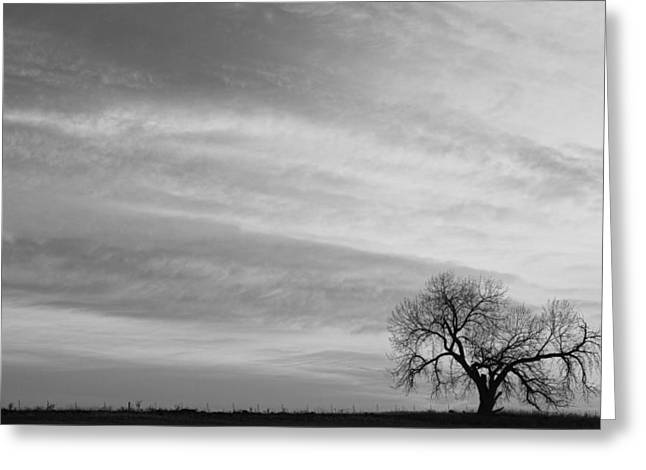 Morning Has Broken Like The First Gentle Breeze Bw Greeting Card by James BO  Insogna