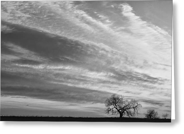 Morning Has Broken Three Trees Bw Greeting Card by James BO  Insogna