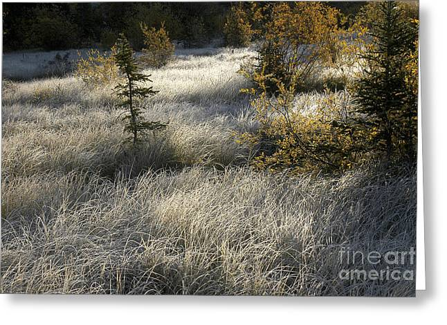 Morning Hoar Frost Greeting Card by Jessie Parker