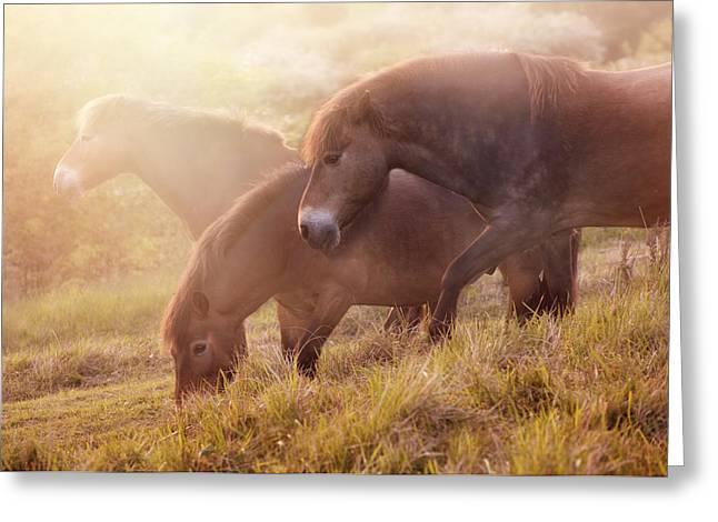 Morning Impresion With Horses Greeting Card by Jaroslaw Blaminsky