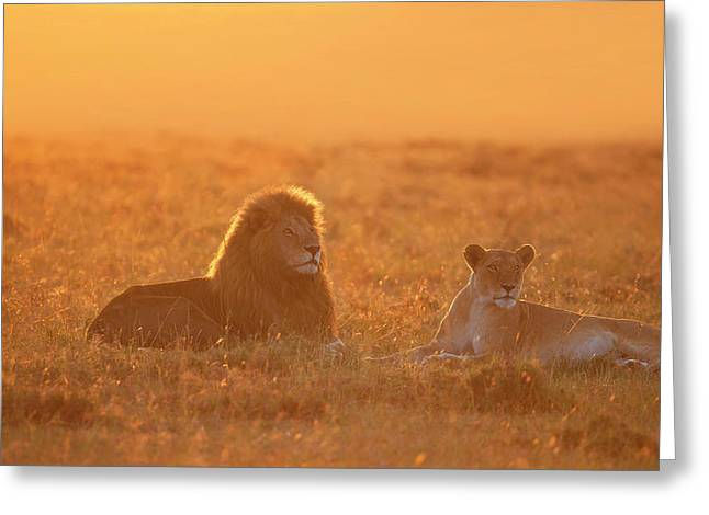 Morning In Africa Greeting Card