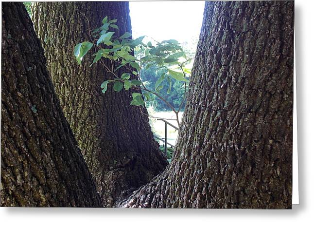 Morning Light In The Walnut Tree by Virginia Kay White