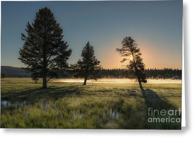Morning Light In Yellowstone Greeting Card by Sandra Bronstein