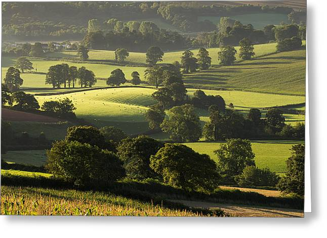 Morning Light On Fields Greeting Card
