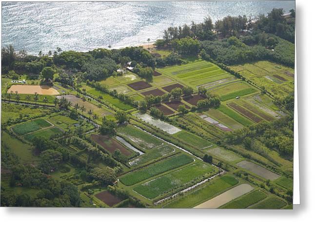 Morning Light Over Kauai Taro Fields Greeting Card by Kai Hyde