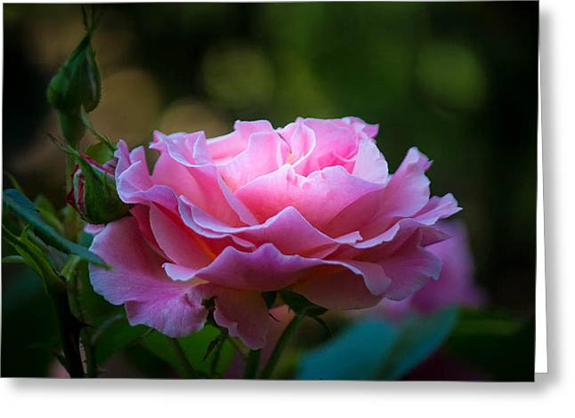 Greeting Card featuring the photograph Morning Light by Patricia Babbitt