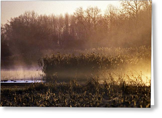 Morning Light Greeting Card by Skip Willits