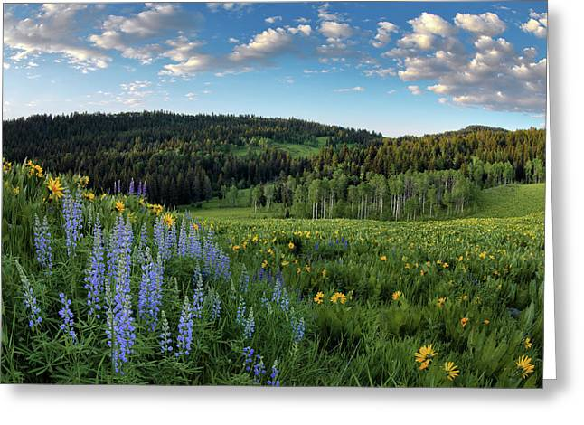 Morning Meadow Greeting Card by Leland D Howard