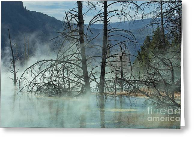 Morning Mist At Mammoth Hot Springs Greeting Card by Sandra Bronstein
