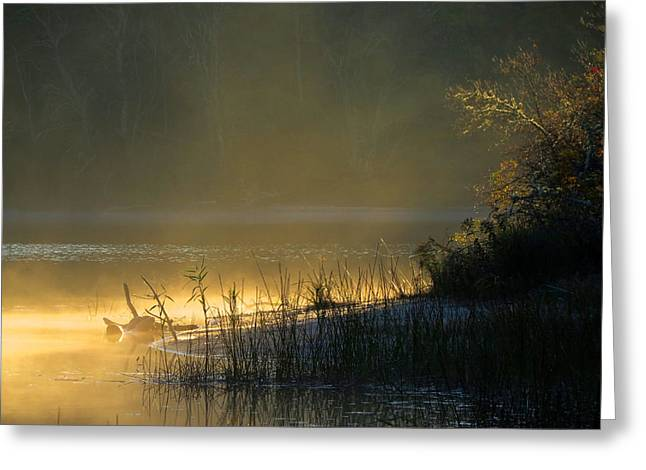 Greeting Card featuring the photograph Morning Mist by Dianne Cowen