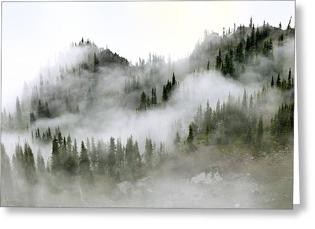 Morning Mist In Olympic National Park Greeting Card by King Wu