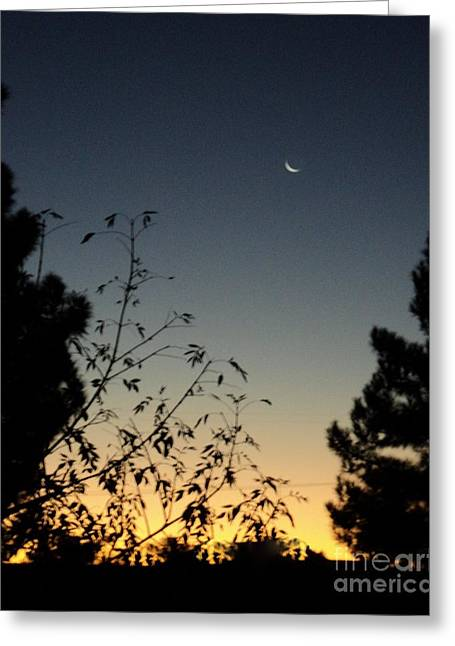 Greeting Card featuring the photograph Morning Moonshine by Carla Carson