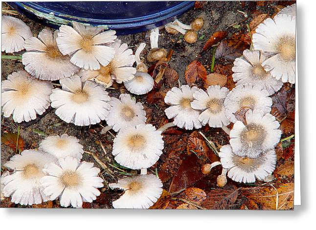 Morning Mushrooms Greeting Card