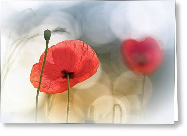 Morning Poppies Greeting Card