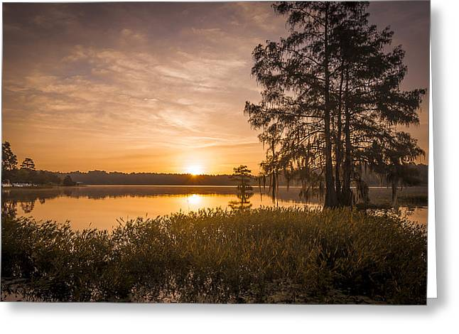 Morning Pull Greeting Card by Steve DuPree