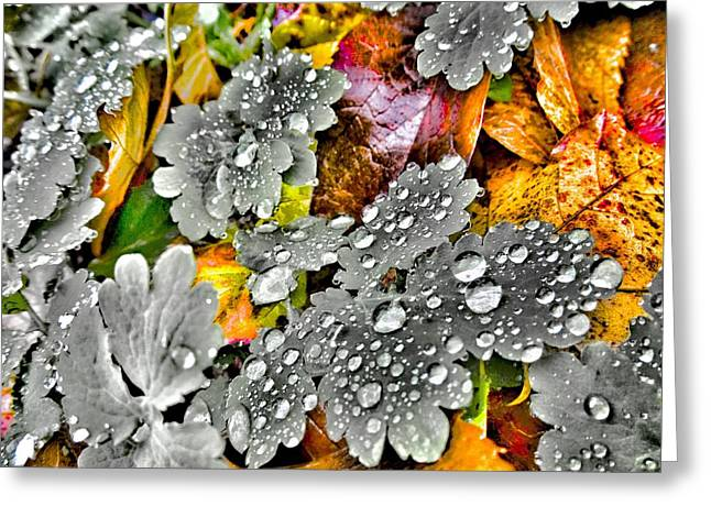 Morning Rain Greeting Card by Marianna Mills