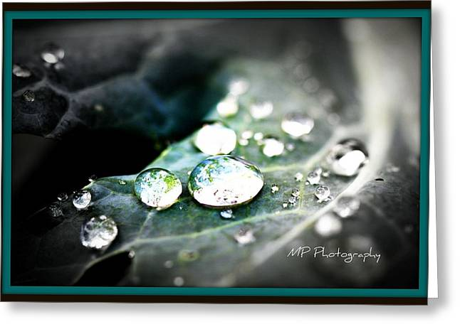Greeting Card featuring the photograph Morning Rain by Michaela Preston