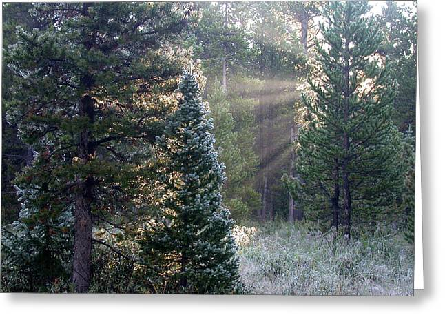 Morning Rays Greeting Card