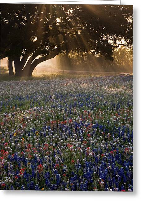Morning Rays Greeting Card by Eggers Photography