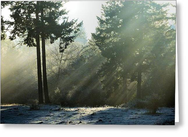 Greeting Card featuring the photograph Morning Rays by Julia Hassett