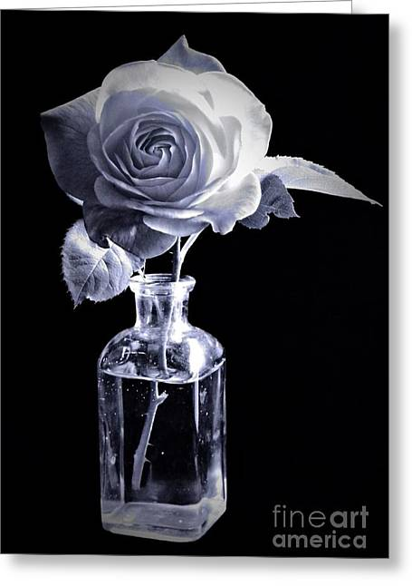 Morning Rose Cyan Greeting Card