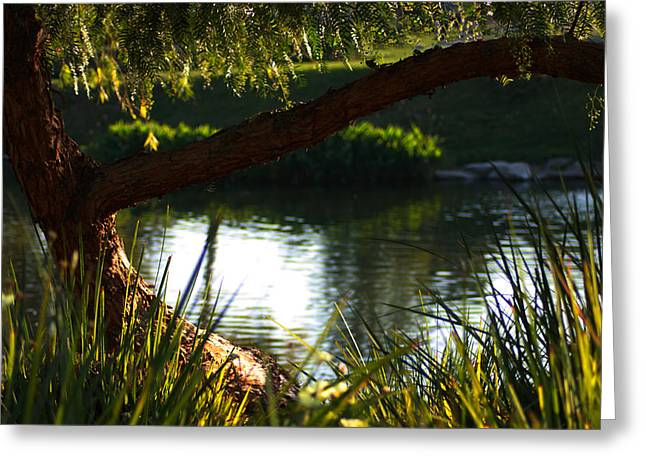 Greeting Card featuring the photograph Morning Serenity by Richard Stephen